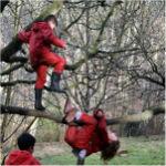 jugar-en-los-árboles