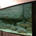 acuario centro visitantes río borosa